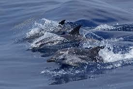 dolfijnen genua noord italie