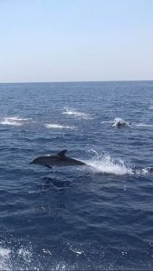 dolfijnen spotten in Genua noord Italië